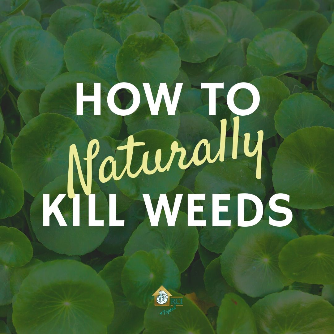 How to Kill Weeds Naturally - RCI Plus Topsail